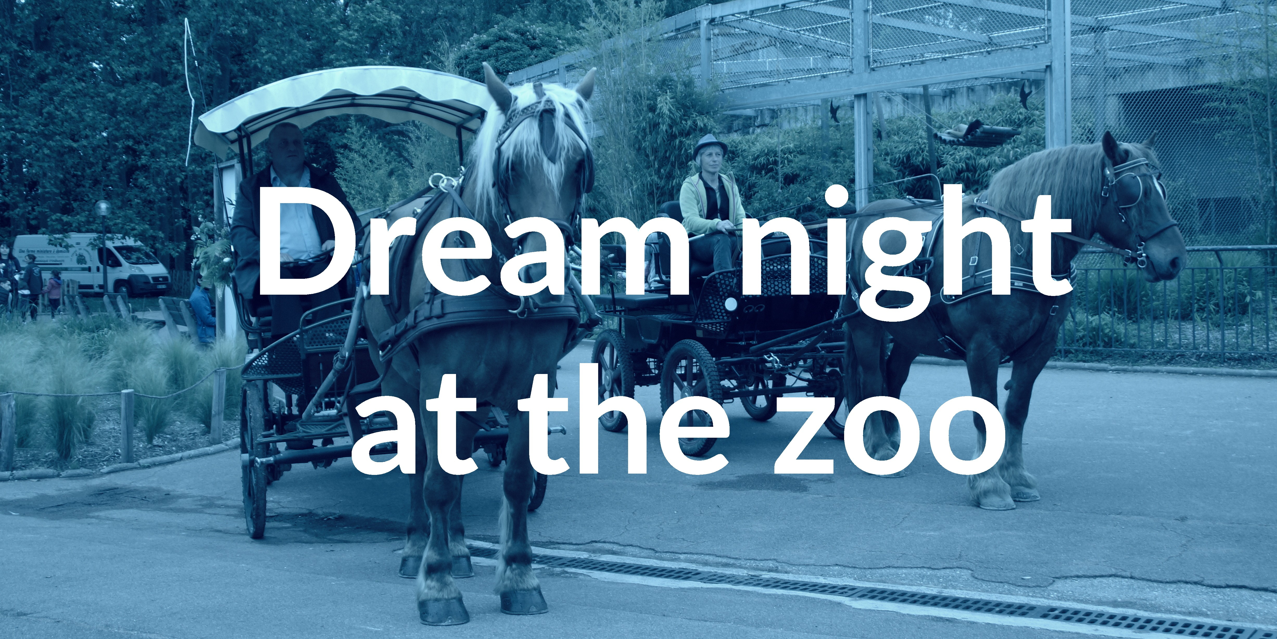 dream night at the zoo